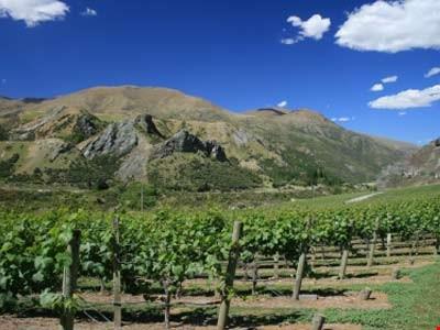 Vintage 2013 Keeps Marlborough Winemakers on Toes