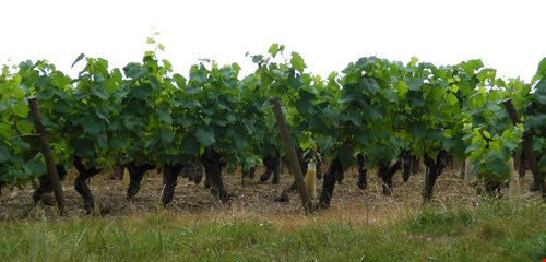 Loire Best Wine Routes