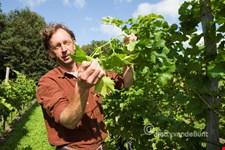 Wijngaard a/d Breede Beek